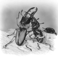 two insects
