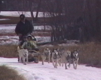 dogsled team