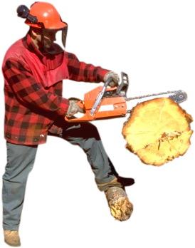 main cutting wood
