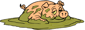pig in mud