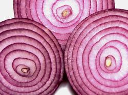 inside of an onion