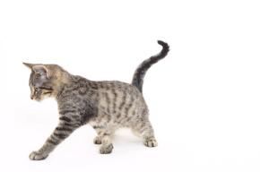 perky kitten